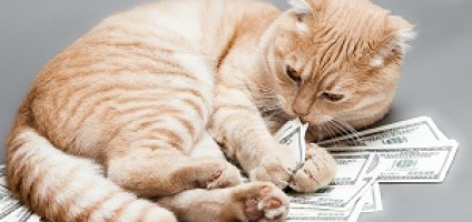 dollar-cat-herofile-shutterstock_223056067